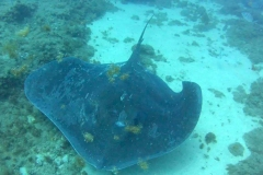 buceo5