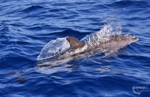 Biosean whale watching and marine science in Tenerife