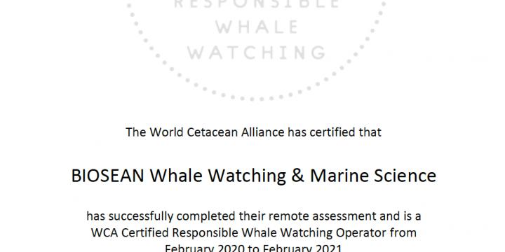 Certificación Internacional para la Observación de Cetáceos en Tenerife