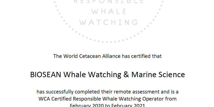 Internationally Certified Whale Watching in Tenerife