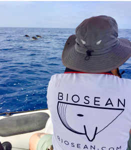 Foto identificacion de cetáceos en Tenerife
