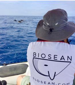 Biosean whale watching in Tenerife