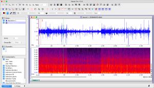 Pilot Whale Acoustic Spectrogram