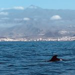 pilot whale and Teide at biosean