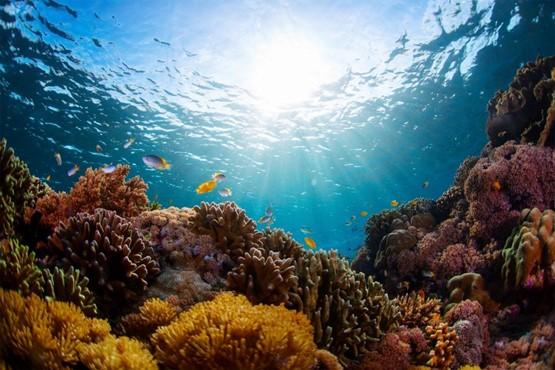 Biodiversidad y ecosistemas marina