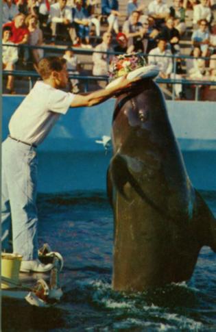 Delfin en delfinario