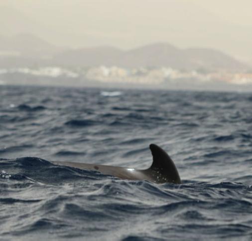 Delfin en libertad