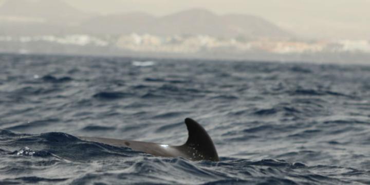 Arte y biología marina unidos por Biosean y Marco Montiel-Soto