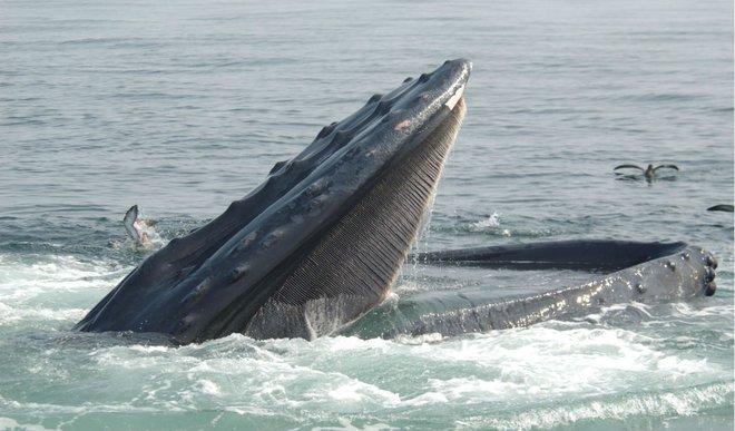 santuario ballenas tenerife